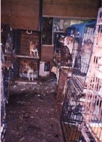 Puppy Mill Puppies