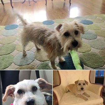 Marilyn S Voice Adoptable Dogs