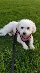 Marilyn's Voice Adoption Testimonials   Happy Tales from