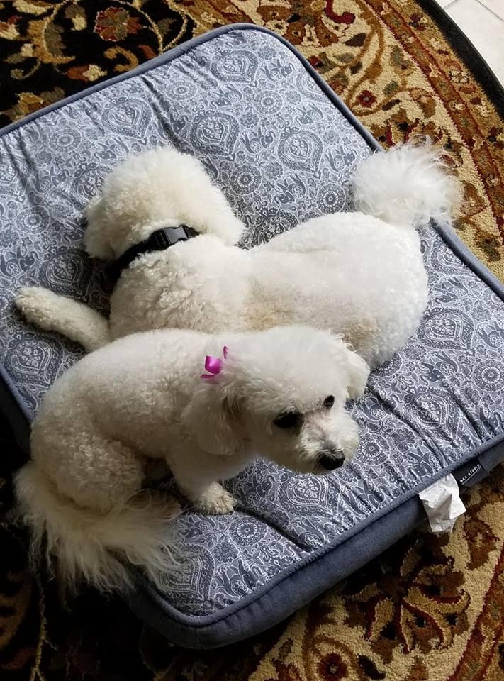 Marilyn's Voice Dog Rescue | 501(c) (3) Non-Profit Organization